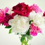 Memelihara Bunga