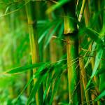 Menjadi Lentur seperti Bambu