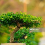 Pohon Kerja Keras