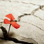 Iman Bertumbuh dengan Cara Sederhana