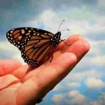 Menjadi Lebih Indah dari Kupu-kupu