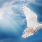 Berada di Bawah Naungan Sayap Tuhan