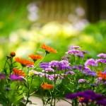 Tidak Semua Bunga Tumbuh Bersamaan