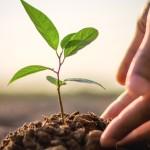Kerjakan Ladangmu dengan Baik, Tuhan yang akan Menumbuhkannya